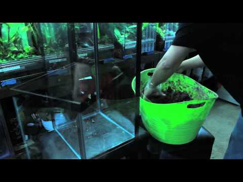 Building a vertical tank for arboreal dart frogs