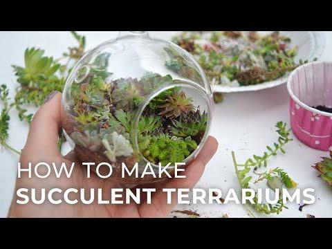 How to plant a Succulent Terrarium