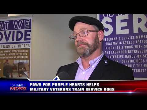 KUSI Evening News Highlights Paws for Purple Hearts Grand Opening