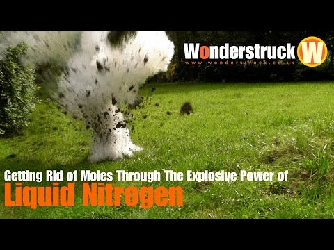 Getting Rid of Moles Through the Explosive Power of Liquid Nitrogen