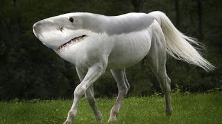 10 Most Shocking Animal Mutations