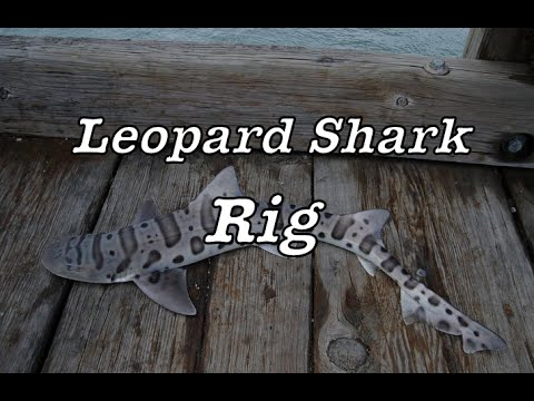 How to Make a Leopard Shark Rig