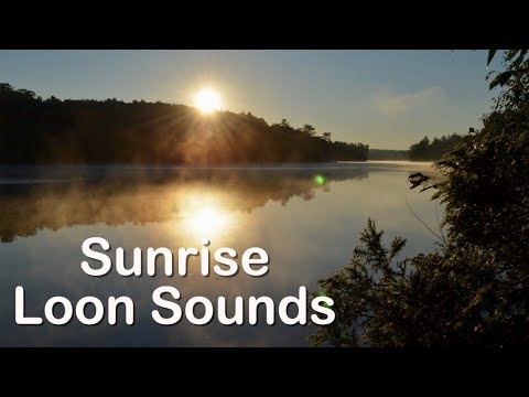 Sunrise with Sparrows and Loons