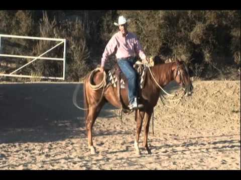Teaching Your Horse To Handle A Rope - 2010.wmv