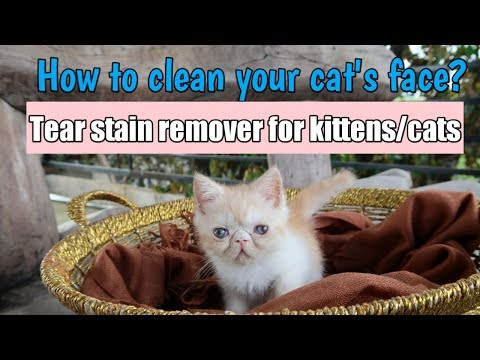 How to clean your cat's eyes | Tear stain remover for cats and kittens | Pet Care Corner