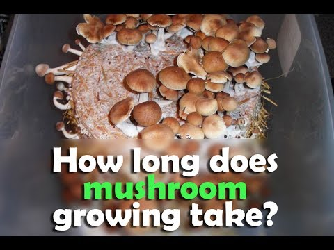 How long does mushroom cultivation take ?