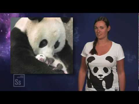 Science in Seconds - Save the Panda