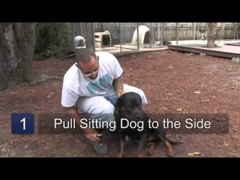 How to Teach Easy Tricks to a Dog