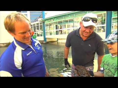 Creek To Coast - Daydream Island Whitsundays Living Reef
