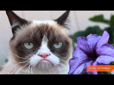 Grumpy Cat and Lil Bub Finally Meet