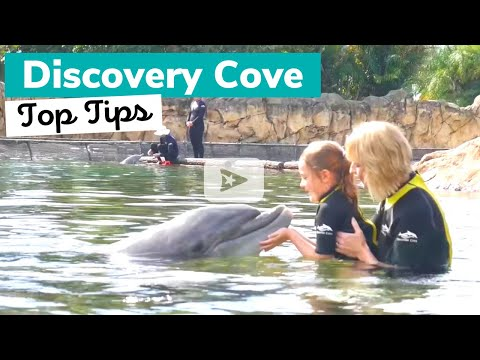 DISCOVERY COVE: What to Know Before You Go