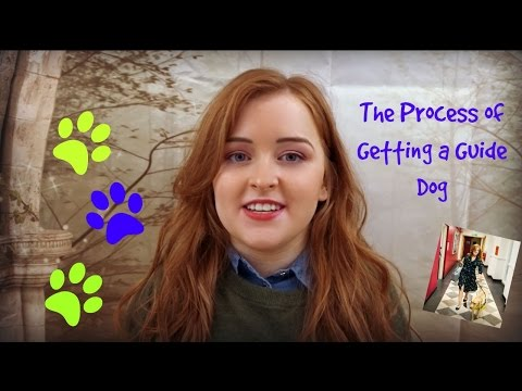 The Process of Getting a Guide Dog | Fashioneyesta