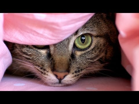 11 Secrets Cats Don't Want You To Know