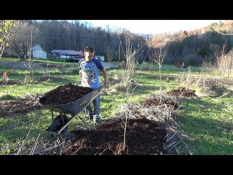 Mulching Fruit Trees In The Fall - Permaculture Food Forest