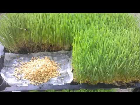 Wheat Grass Tray Grow Starter Kit System Paper Moss Medium Seeds Bottle