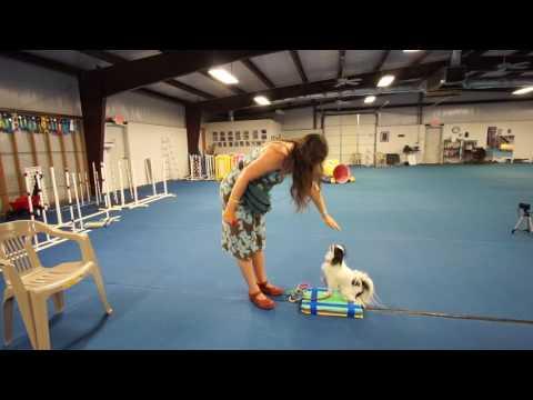Hestia's platform training: week 5