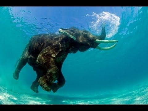 Elephants enjoy a swim in their very own pool