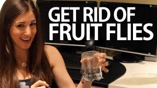 How To Get Rid Of Fruit Flies Easy Household Cleaning Ideas Clean My