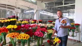 Elite Flower, Jacob Mccall 2