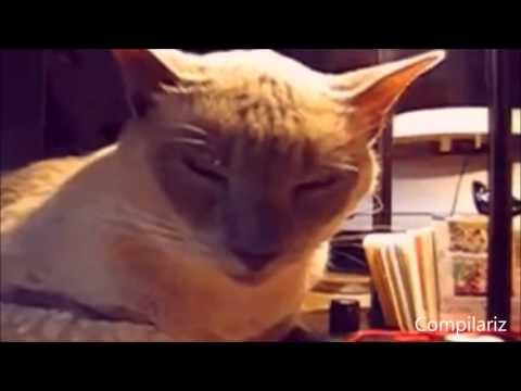 funny cat videos