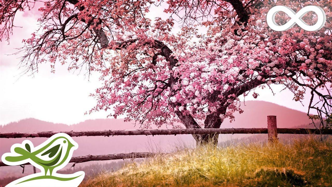 Relaxing Piano Music: Romantic Music, Beautiful Relaxing Music, Sleep Music, Stress Relief ★122