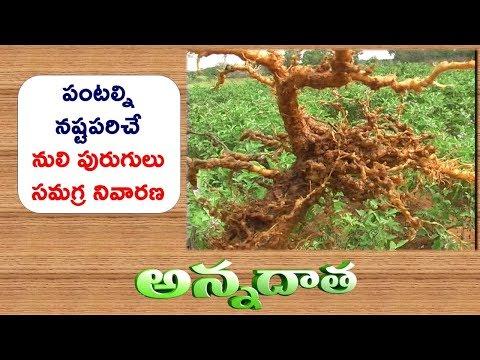 Nematode Damage to Crops || ETV Annadata