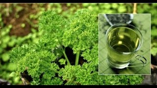 100 Natural Urinary Tract Infection Cure Just One Ingredient