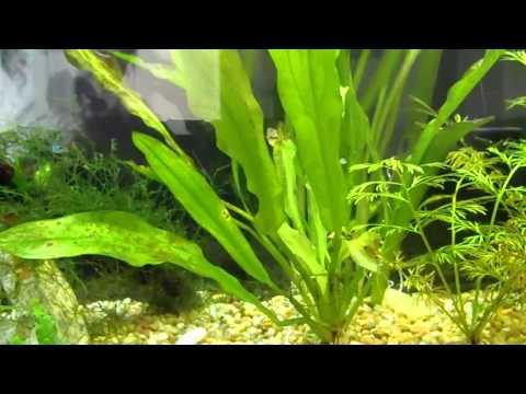 tropical aquarium fish part II.MP4