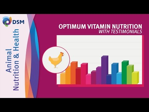 DSM's Vision on Optimum Vitamin Nutrition with Testimonials by DSM Animal Nutrition and Health