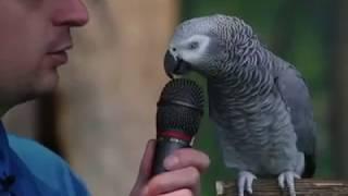 Download تقلید صدای طوطی جالب و دیدنی Video