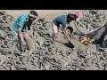People Catching catfish  by hand In Mud water pond |  how to catching fish from muddy pond