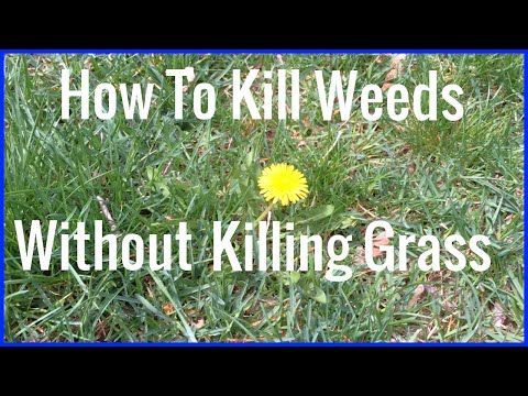 How To Kill Weeds Without Killing Grass -  Best Weed Control