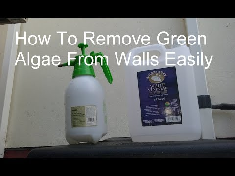 Killing Algae On Outside Walls