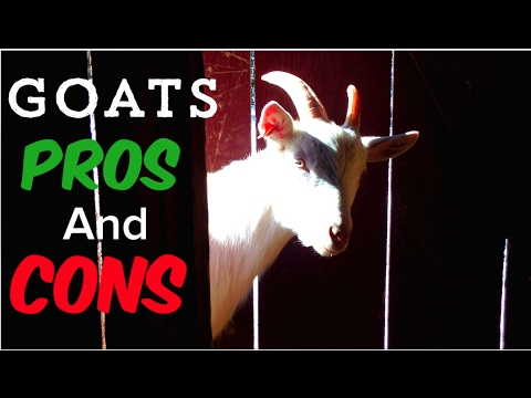 Homestead Dairy Goats - PROS and CONS