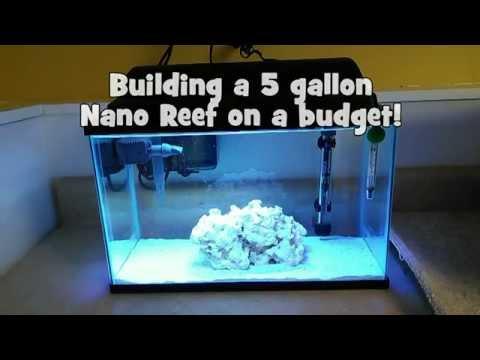 Building a 5 gallon Nano Reef on a budget!