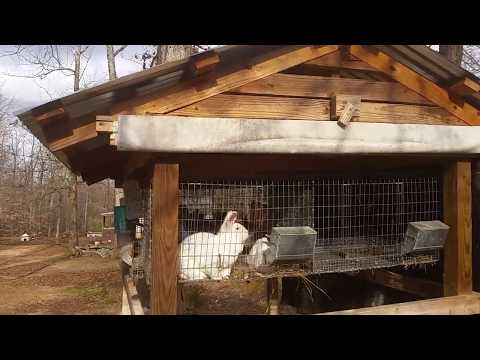 Mating rabbits and update on the homestead