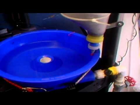 Blue Bowl Gold Lab Homemade