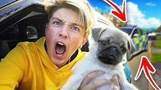 I took my DOG out in NEW CAR and THIS HAPPENED...
