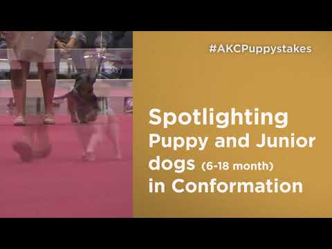 AKC Royal Canin National All-Breed Puppy and Junior Stakes (1)