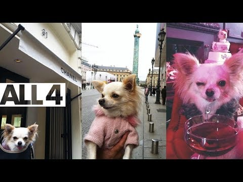 Dancing Dog Owns 30 Costumes, Shops in LA & Paris | Posh Dogs