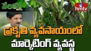 Marketing Strategies for Organic Products | Nagaratnam Naidu Suggestions | Nela Thalli | hmtv