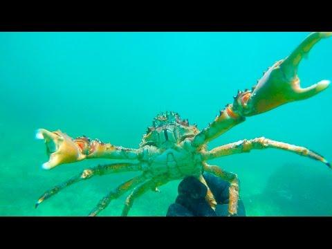 Crabbing Underwater By HAND