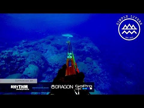 Spearfishing Australia, Queensland // Ribbon Reefs Great Barrier Reef QLD