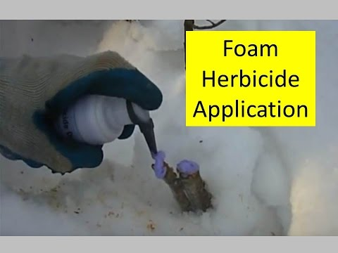 Invasive Weed Trees - Killing Them with a New Foam Herbicide Dispenser from Green Shoots