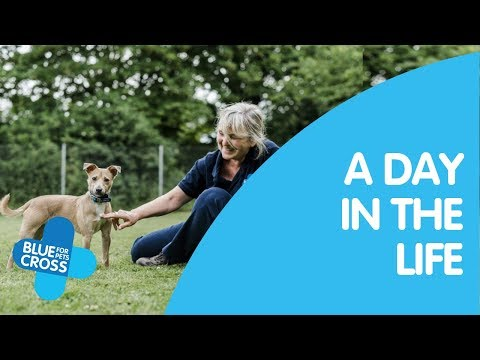A day in the life of a Blue Cross Volunteer