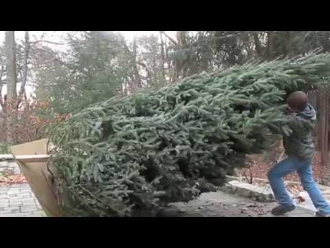 large Christmas tree stand