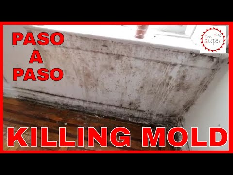 Como quitar remover moho de las paredes