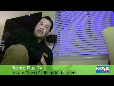 How to Detect Bedbugs in the Home