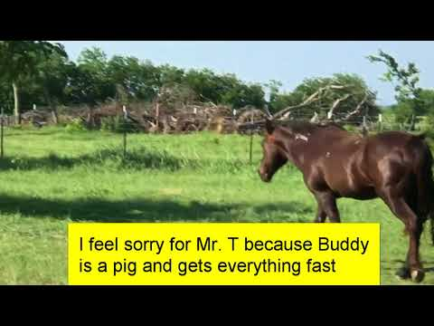 Mr. T the Horse Won't Take My Apple