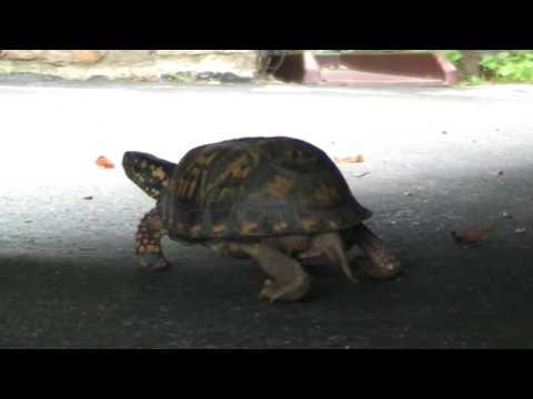 The Turtle , Turtle Teenage Journey, Banjo, Ninja